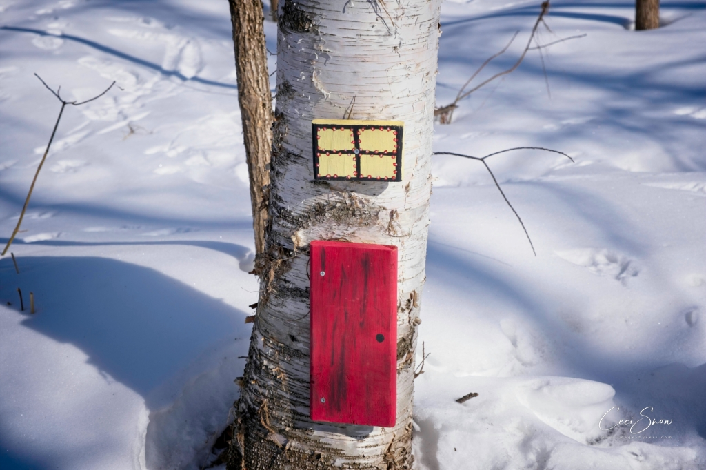 Red door and window on tree into a fairy world